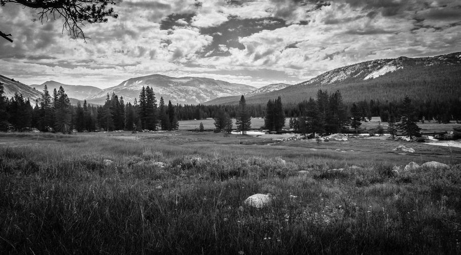 Ansel Adams Inspired Exploring Field Hiking John Muir PeacefulEasyFeeling Serenity Tuolumne Meadows Yosemite Yosemite National Park Beauty In Nature Cabin Day Meadow Mountain Mountains National Parks Nature No People Outdoors Rocks Scenics Sky Tranquility Tree