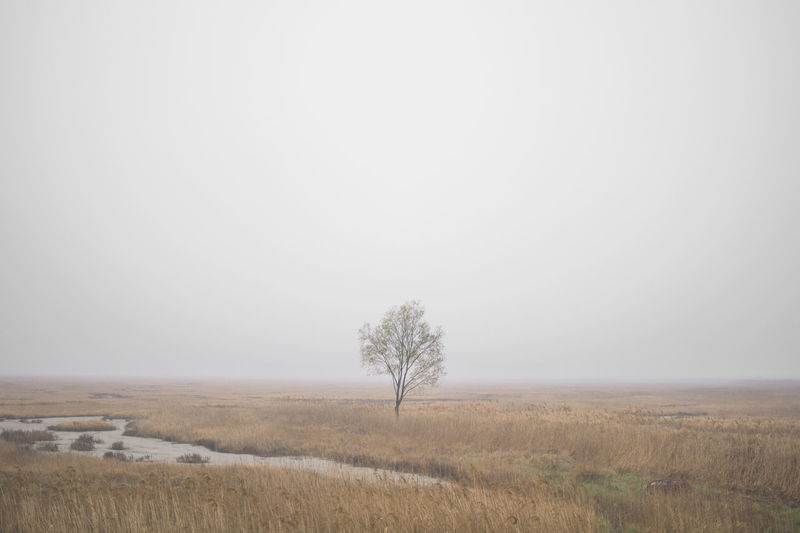 Bare Tree Beauty In Nature Clear Sky Day Field Grass Horizon Over Land Isolated Korea Landscape Lone Nature No People Outdoors Scenics Sky Solitude Tranquil Scene Tranquility Tree