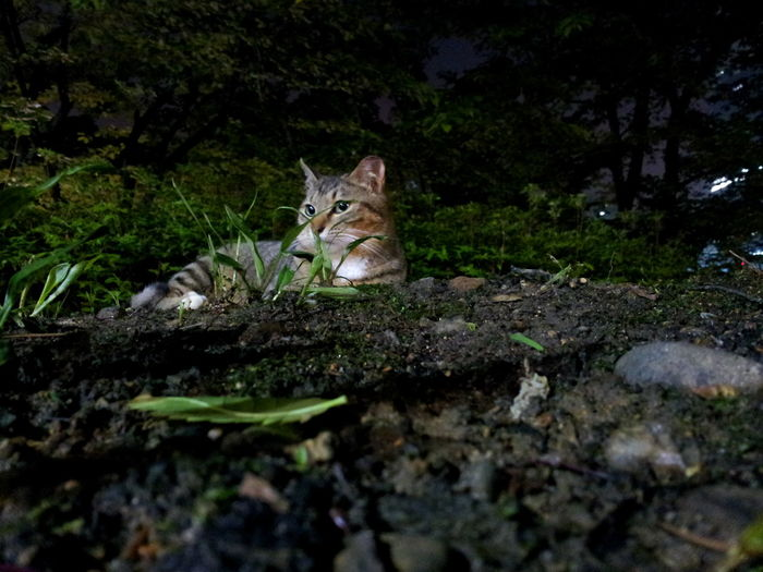 Beauty In Nature Catlover Close-up Forest Nature No People Seokchon Lake Cats Tree