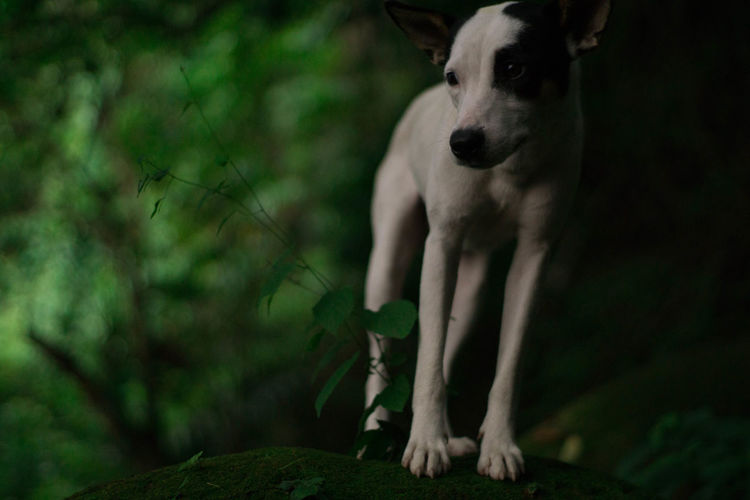 Forest guardian Dog Nature Forest Outdoors Philippines Batangas Sommergefühle EyeEm Selects