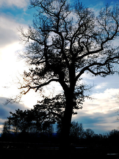 Bare Tree Beauty In Nature Branch Cloud - Sky Day Growth Low Angle View Nature No People Outdoors Scenics Silhouette Sky Sunset Tranquility Tree