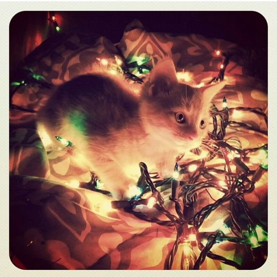 Creative Light And Shadow Kitty Christmas Lights Amazement And Wonderment Warmth Cute Cats Curious Cat