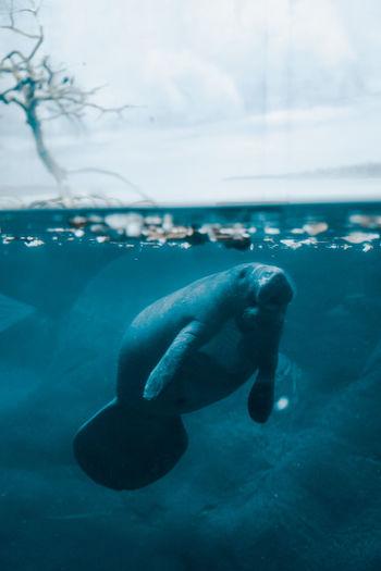 Animal swimming in sea