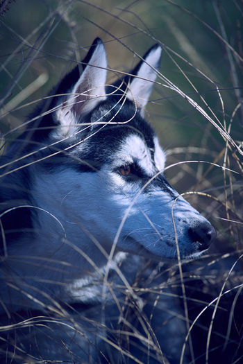 Close-up of dog standing on field