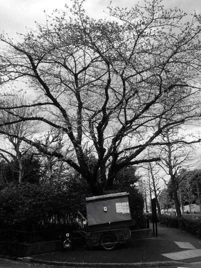 Urban Landscape Tokyo,Japan Tokyo Street Photography Blackandwhite Black And White Black & White Blackandwhite Photography