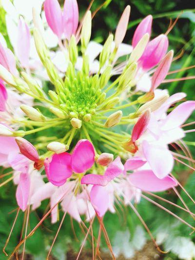 flowers of sun