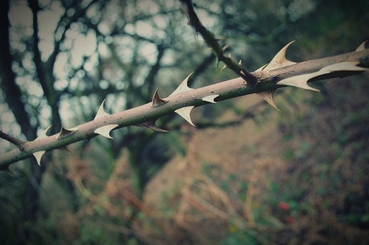 Thorns A Walk In The Woods Sharp Prick Shark Fin Nature Nature Photography EyeEm Nature Lover United Kingdom Nikon D3200