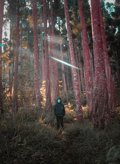 Person wearing mask while standing by trees in forest