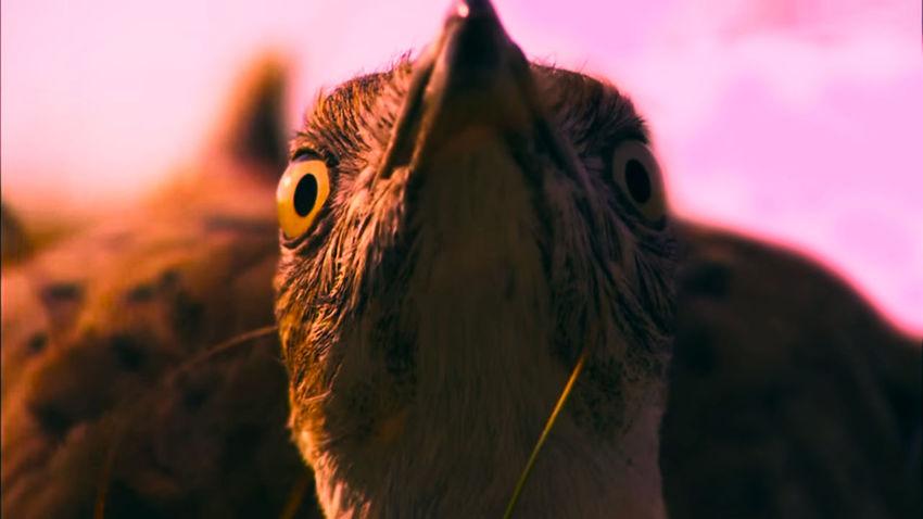 Bird Bird Photography EyeEm Selects Portrait UnderSea Eye Close-up Animal Body Part