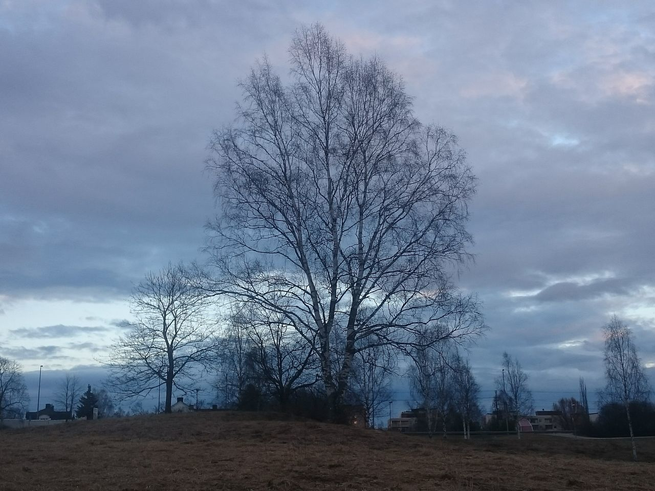 bare tree, sky, tree, cloud - sky, nature, tranquility, outdoors, landscape, no people, day, beauty in nature, scenics