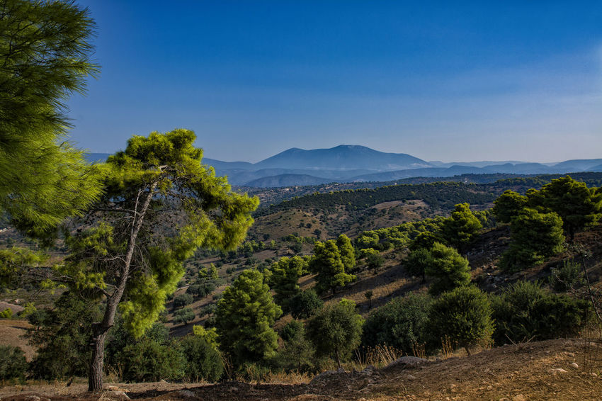mediterranee Beauty In Nature Blue Clear Sky Day Forest Greece Growth Landscape Mountain Mountain Range Méditerranée Nature No People Outdoors Peloponnese Scenics Sky Tranquil Scene Tranquility Tree