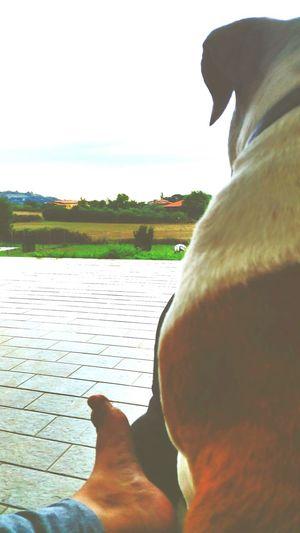 Io E Il Mio Cane :) Casucucciamia Wheather Reflaction Di vedetta! Cozzetta di mamma 😄