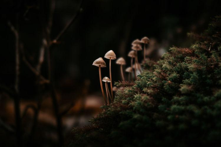 Close-up of mushroom growing