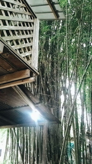 Bamboo Riverside The Essence Of Summer Green Tree Nature View Panorama Malaysia Photography Forest Janda Baik