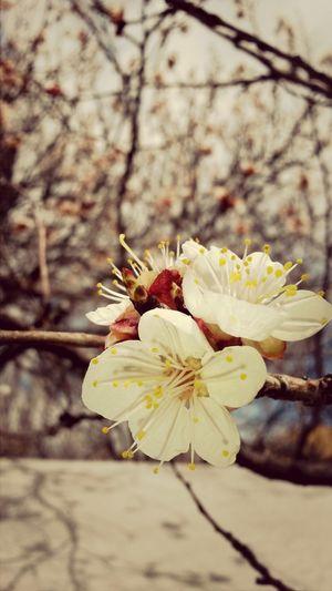 Bahar Spring Yasasin Lovely
