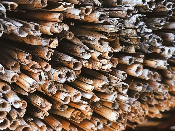 Bunch of straws (used as a rustic roof) 🏠... Reed Reed - Grass Family Close Up Roof Natural Nature Texture Design Industry Rustic Straw Batch Full Frame Backgrounds Wood Wood - Material Stack Abundance Large Group Of Objects Timber Lumber Industry Pattern Woodpile Deforestation Tree Heap Forest Textured  Repetition Firewood 17.62°