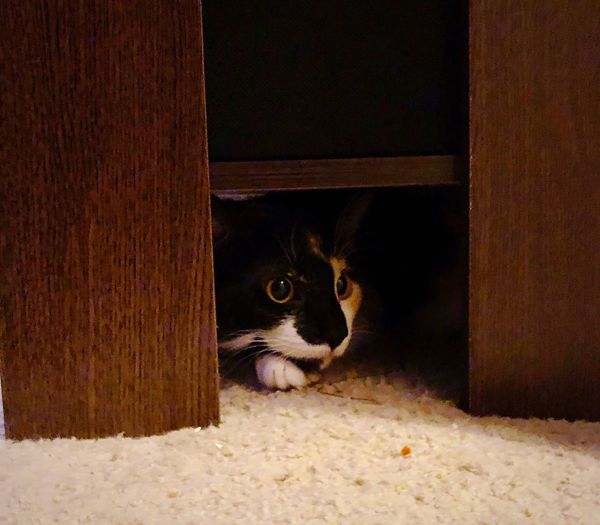 Sneaky Kitty Hiding Cat Peek-a-boo Animal Themes One Animal Mammal Domestic Animals Pets No People Domestic Cat Indoors  Feline Close-up