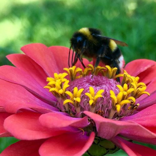 Flowering Plant Flower Animal Themes Animal Petal One Animal Fragility Plant Beauty In Nature Flower Head Bee Insect