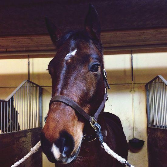 Horse Horses Love My Love My little love❤️