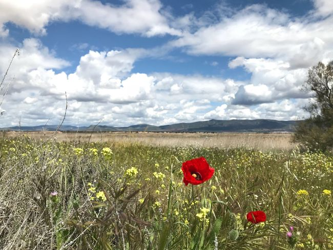 Cloud - Sky Flower Sky Plant Flowering Plant Land Beauty In Nature Field Nature Scenics - Nature Environment Day