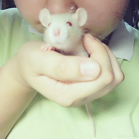 3 days..and I put her on hand successfully o(*≧▽≦)ツ FancyRat Rat
