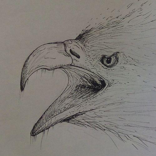 Inktober Art Illustration Eagle
