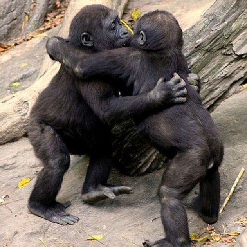 Monkeyluv Snuggle Sweethugs