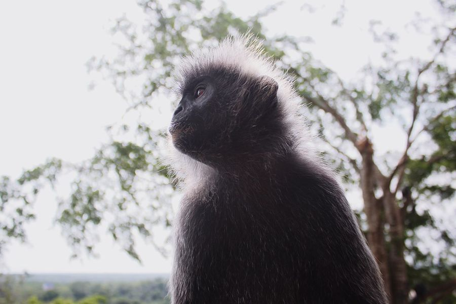 monkey Animal Themes Animal One Animal Animal Wildlife Mammal Animals In The Wild Tree Primate Monkey Looking Away Low Angle View Close-up Looking