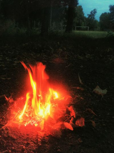 делобыловечером делатьбылонечего 😍😌😊 Flame Heat - Temperature Burning Tree Lava Close-up