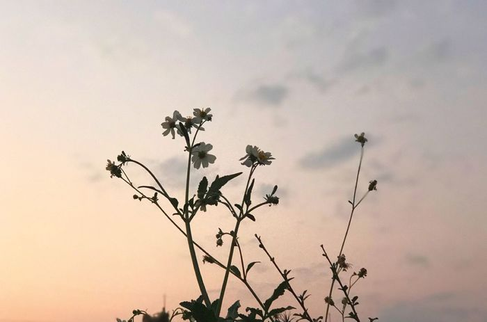 Fieldscape Grass Close-up Beauty In Nature Growth Sky Flower Nature Fragility Beauty In Nature No People Sunset Outdoors Freshness Low Angle View Tree Day Flower Head
