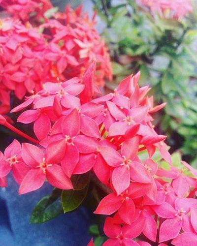 Summer bloom 😍