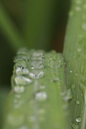 Rain drops on