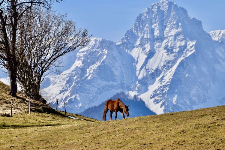 Horse standing on snow covered mountain against sky