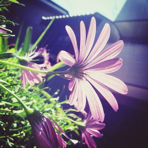 世界の裏側っていうと、悪そうな気がするけど、そんなことないのかも。 Natural Nature Flower Photography