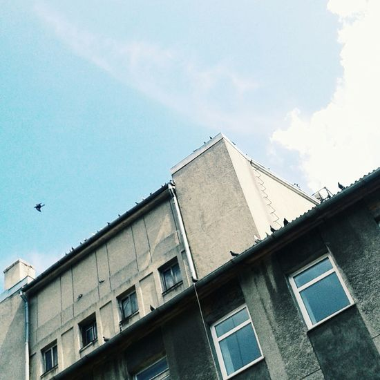 здание голуби умань небо и облака красиво