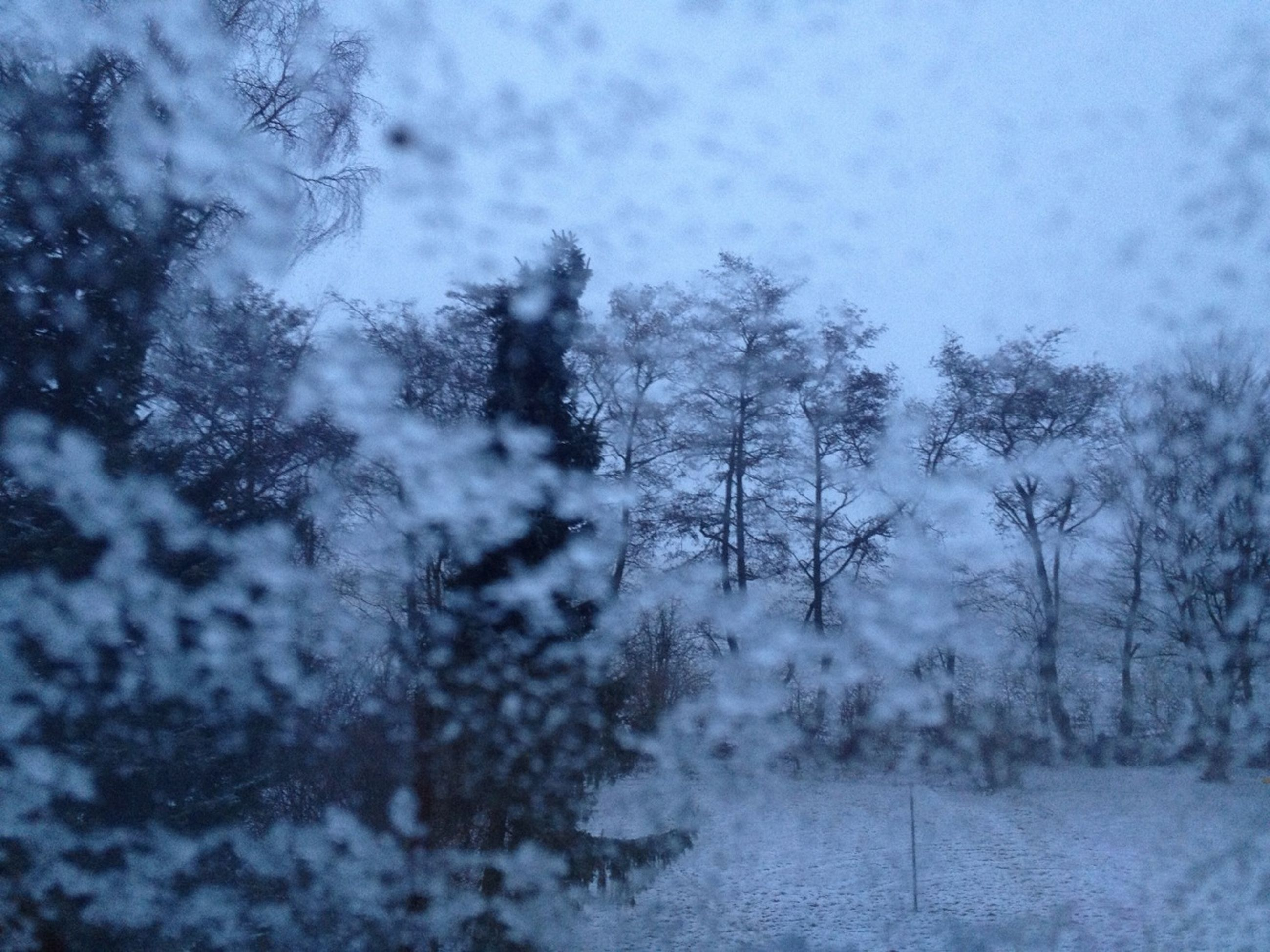 season, weather, tree, winter, cold temperature, snow, sky, nature, rain, wet, glass - material, window, transparent, tranquility, day, beauty in nature, water, focus on foreground, drop, no people