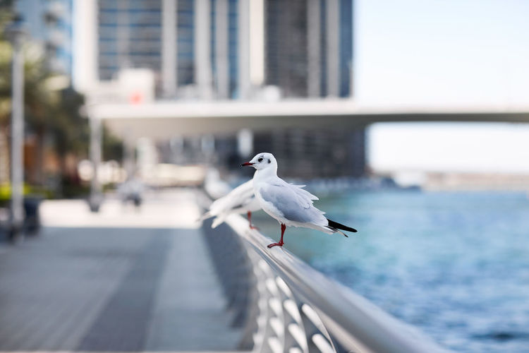 Seagulls sit on the parapet against the backdrop of the city landscape.