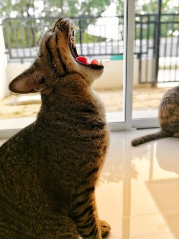 Cat Cat Thailand :) EyeEm Selects Window Looking Through Window One Animal Day Animal Themes Mammal Pets