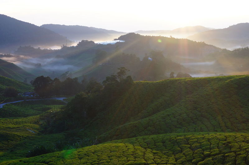 Sunrise at Cameron Highland Malaysia Abstract Background Beauty In Nature Cameron Highlands Farm Lamdscape Malaysia Moments Mountain Nature Nature Outdoors Sky Sky Blue' Sunrise Travel