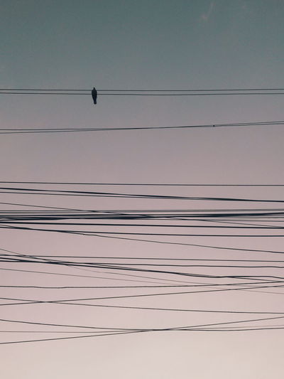 Bucharest Romania Blue Hour Bird On A Wire Bird Water Lake Sky Calm Telephone Line Power Line  Power Supply Electricity  Cable Seagull A New Beginning Analogue Sound