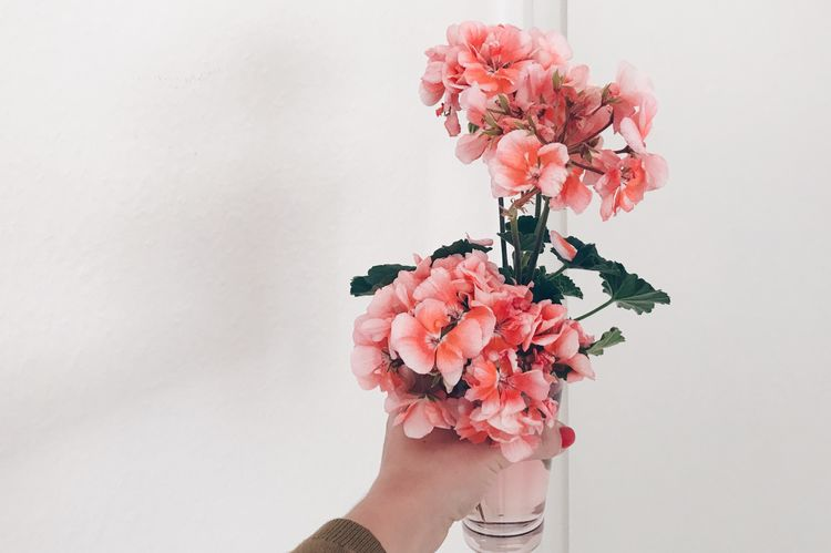 The Week On EyeEm Last days of summer 🌸 Flower Human Hand Fragility One Person Pink Color Human Body Part Petal Freshness White Background Holding Close-up Real People Indoors  Beauty In Nature Flower Head Bouquet Women Flower Collection Flowers,Plants & Garden Love Yourself The Still Life Photographer - 2018 EyeEm Awards