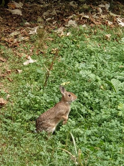 Park Leaf Trees Tree Garden Photography Garden Green Green Color No Filter, No Edit, Just Photography No Filter Community Italy Squirrel High Angle View Field Rodent Animal Themes Grass Rabbit Wildlife Growing Blooming Wild Animal