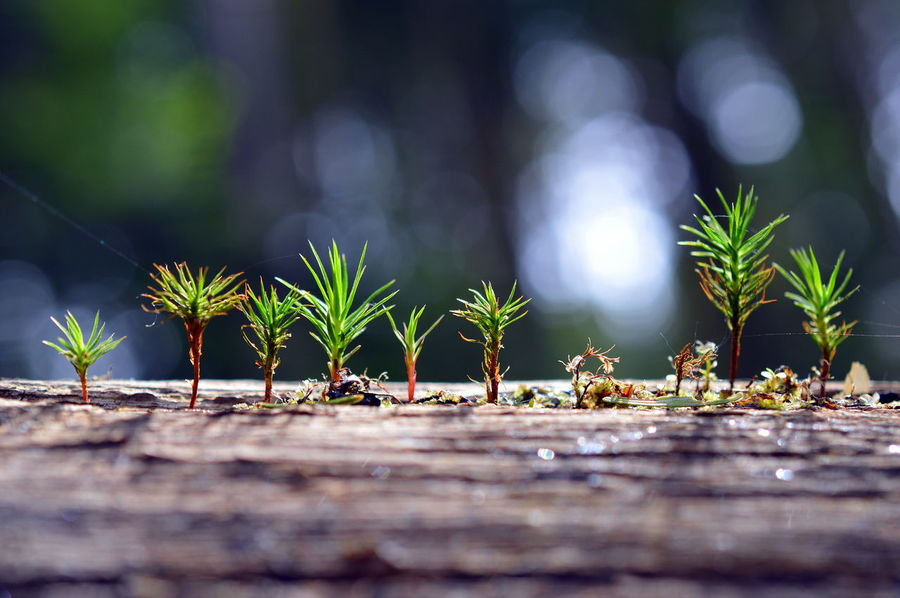 EyeEm Nature Lover EyeEmNewHere Green Hiking In A Row Trees Beauty In Nature Beginnings Close-up Day Forest Fragility Growing Growth Leaf Mini World Nature New Life New Life & New Hope No People Olefingirl Outdoors Plant Selective Focus Tiny World