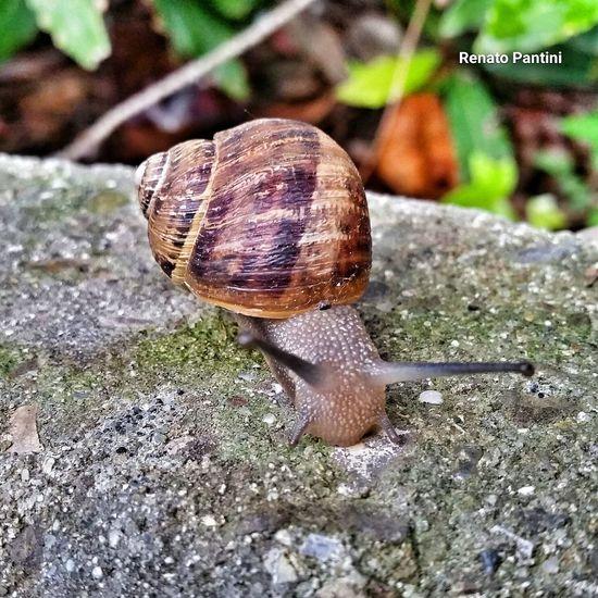 Chiocciola Chiocciole Snail🐌 Snail Snails🐌 Snails Snapseed Snapseed Editing  Animals Animali Samsung Galaxy S5 GalaxyS5