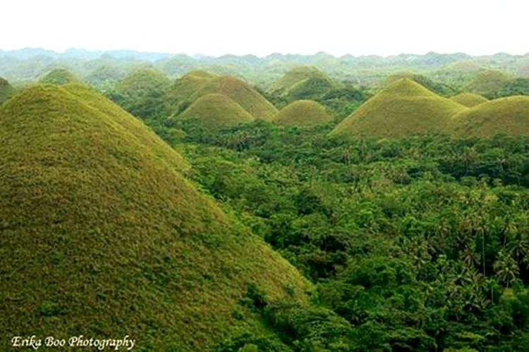 Chocolate Hills is said to be made up by accumulated sea shells, corals, and many more. This island before was flooded with sea waters. <3 RePicture Travel Famous Chocolate Hills EyeEm Best Shots - Nature Chocolate Hills Beautiful View Awesome_nature_shots