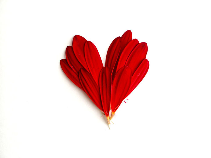Close-up of heart shape made from red tulip petals on white background