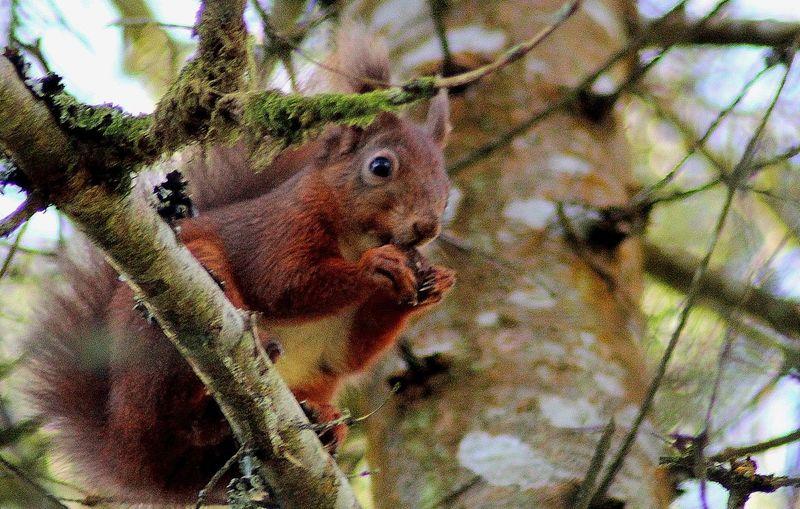 that's my nut