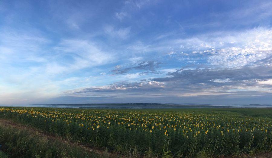 Поля в России Поля России горизонт Growth Nature Field Beauty In Nature Landscape Tranquility Tranquil Scene