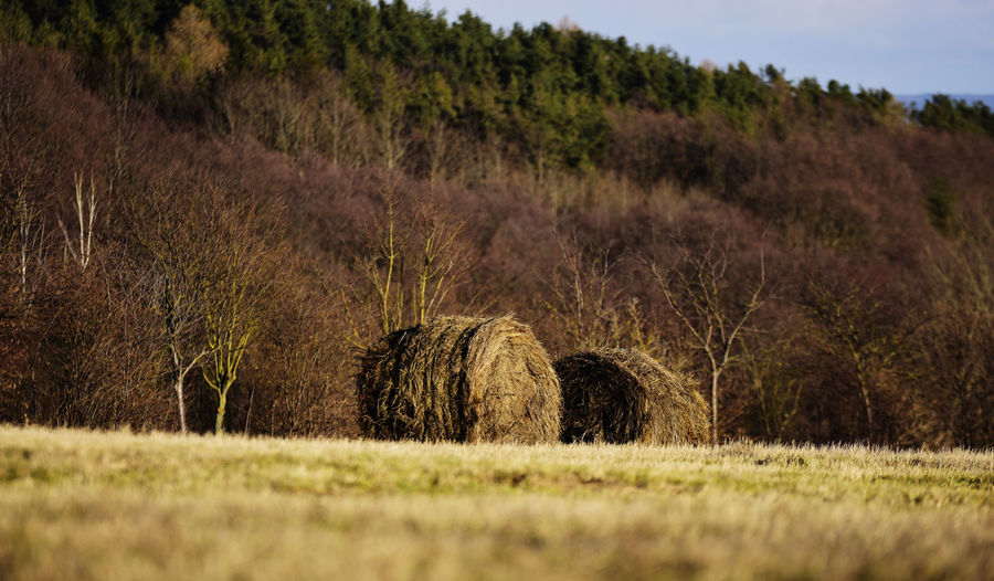 Agriculture Bale  Beauty In Nature Day Farm Field Grass Growth Hay Hay Bale Haystack Landscape Nature No People Outdoors Rural Scene Tranquil Scene Tranquility Tree