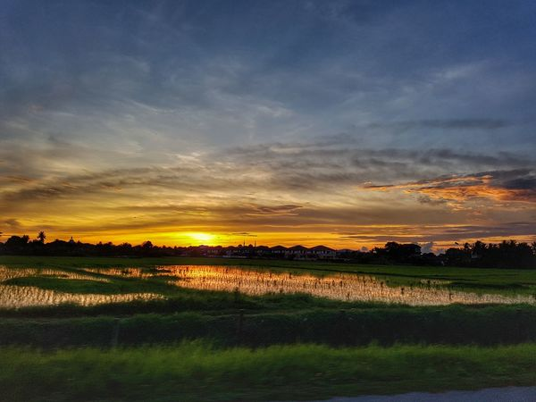 Sunset over paddy field in Kedah, Malaysia. Water Rural Scene Sunset Tree Rice Paddy Agriculture Field Crop  Farm